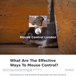 What Are The Effective Ways To Mouse Control? – Mouse Control London