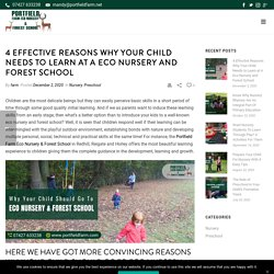 4 Effective Reasons Why Your Child Needs to Learn at A Eco Nursery and Forest School