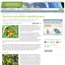 Top 6 most cost-effective vegetables to grow