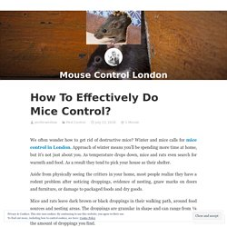How To Effectively Do Mice Control? – Mouse Control London