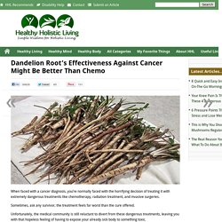 Dandelion Root's Effectiveness Against Cancer Might Be Better Than ChemoHealthy Holistic Living