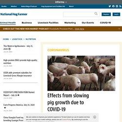 NATIONAL HOG FARMER 23/07/20 Effects from slowing pig growth due to COVID-19