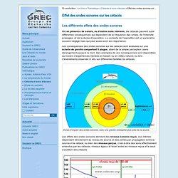 Effet des ondes sonores sur les cétacés - Le GREC