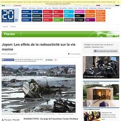 Japon: Les effets de la radioactivité sur la vie marine