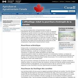 AGRICULTURE CANADA 17/12/07 L'effeuillage réduit la pourriture d'entrepôt de la carotte