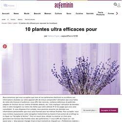 10 plantes ultra efficaces pour éloigner les moustiques