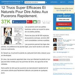 12 Trucs Super Efficaces Et Naturels Pour Dire Adieu Aux Pucerons Rapidement.