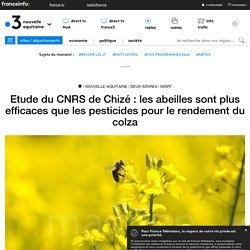 Etude du CNRS de Chizé : les abeilles sont plus efficaces que les pesticides pour le rendement du colza