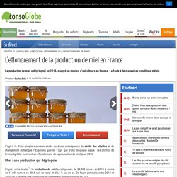 L'effondrement de la production de miel en France