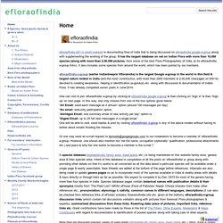 efloraofindia