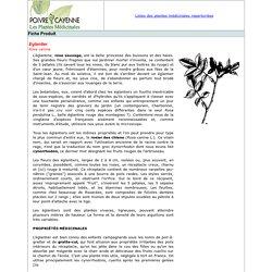 Eglantier-Plante médicinale