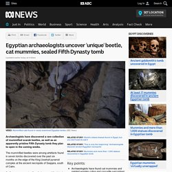 Egyptian archaeologists uncover 'unique' beetle, cat mummies, sealed Fifth Dynasty tomb