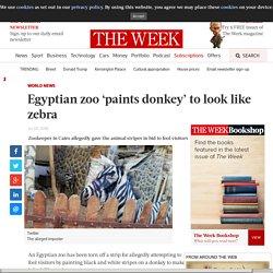 Egyptian zoo 'paints donkey' to look like zebra
