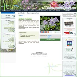 Eichornia crassipes Jacinthe d'eau achat vente le jardin d'eau