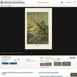 Eintagsfliege. - NYPL Digital Collections