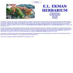 Ekman Herbarium, Haiti