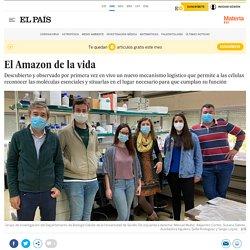 El Amazon de la vida