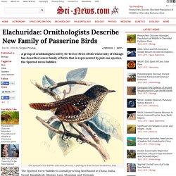 Elachuridae: Ornithologists Describe New Family of Passerine Birds