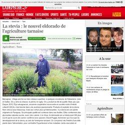 LA DEPECHE 09/11/14 La stevia : le nouvel eldorado de l'agriculture tarnaise