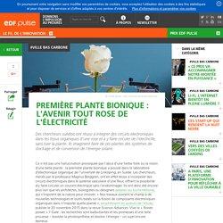Première plante bionique : l'avenir tout rose de l'électricité