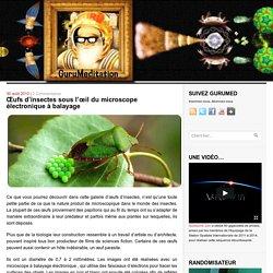 Œufs d'insectes sous l'œil du microscope électronique à balayage