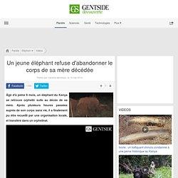 Un jeune éléphant refuse d'abandonner le corps de sa mère décédée