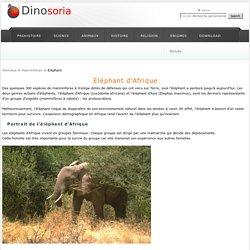 Elephant. Afrique. En Images. Dinosoria