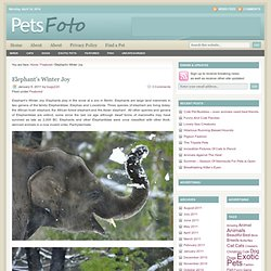 Elephant's Winter Joy | Pets - Exotic, Animals, Stories
