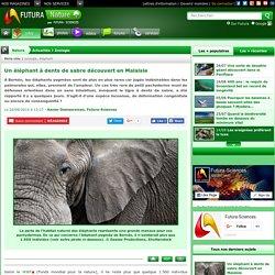 Un éléphant à dents de sabre découvert en Malaisie