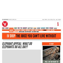 Elephant Appeal: What do elephants do all day? - IV Drip - Voices