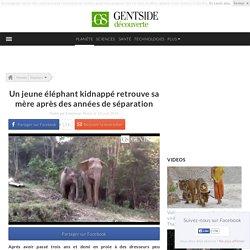 Un jeune éléphant kidnappé retrouve sa mère après des années de séparation
