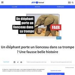 Un éléphant porte un lionceau dans sa trompe ? Une fausse belle histoire