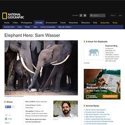 Elephant Heroes -