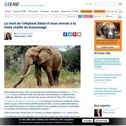 La mort de l'éléphant Satao II nous renvoie à la triste réalité du braconnage