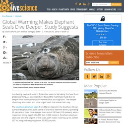 Global Warming Makes Elephant Seals Dive Deeper, Study Suggests
