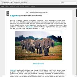 Elephant always close to human: