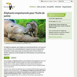 Éléphants empoisonnés pour l'huile de palme