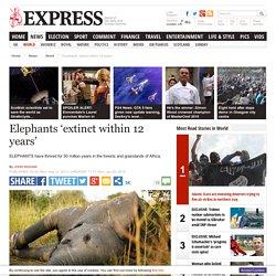 Elephants 'extinct within 12 years'