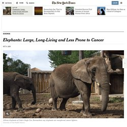 Elephants: Large, Long-Living and Less Prone to Cancer