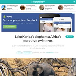 Lake Kariba's elephants: Africa's marathon swimmers.