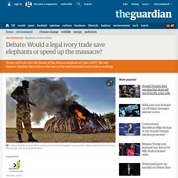 Debate: Would a legal ivory trade save elephants or speed up the massacre?