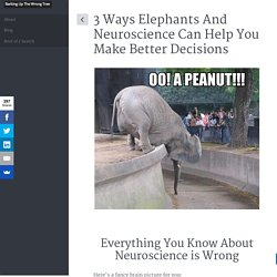 3 Ways Elephants And Neuroscience Can Help You Make Better Decisions
