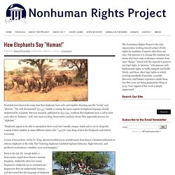 """How Elephants Say """"Human!"""" : The Nonhuman Rights Project"""