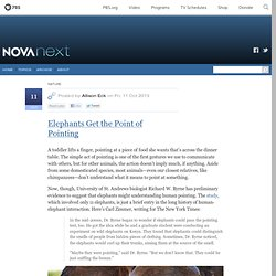 Elephants Get the Point of Pointing — NOVA Next