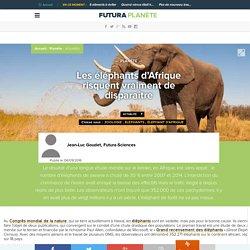 Les éléphants d'Afrique risquent vraiment de disparaître