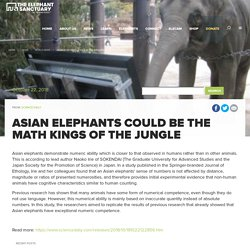 Asian elephants could be the math kings of the jungle - World News - The Elephant Sanctuary in Tennessee
