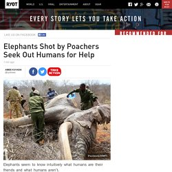 Elephants Shot by Poachers Seek Out Humans for Help