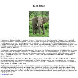 Elephants - White Elephants