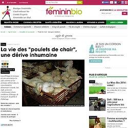 Poulet Chair : élevage et abattoirs