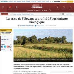 La crise de l'élevage a profité à l'agriculture biologique